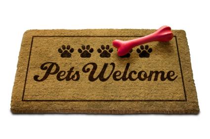 dogs, foodservice, dog-friendly restaurants