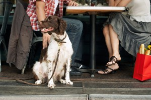 dog-friendly restaurants and hotels